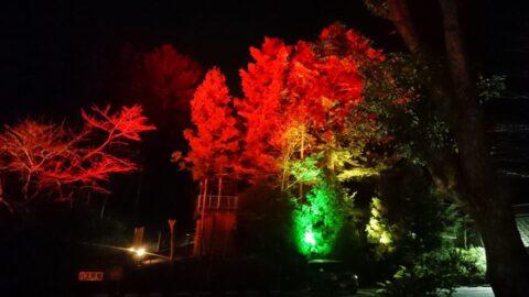 イルミネーション「樹光」クリスマスVer|かさがた温泉せせらぎの湯