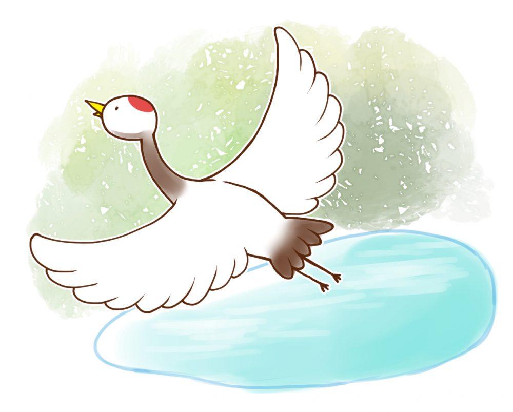 皿池から飛び立つ鶴