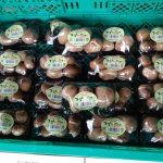 うわさの「まるしいたけ」が土日限定20パック販売!道の駅「銀の馬車道・神河」 #神河町