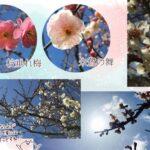 (ねこレポ)兵庫県立フラワーセンターに春を見に行ってきた。加西市