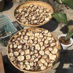 お店で椎茸も販売。 薪窯パン工房丸藤