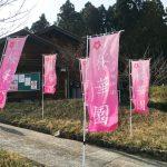 240品種3000本の桜。かみかわ桜の山 桜華園