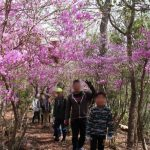 (開催されました)4月8日(日)浅野区 | 浅野の里山花めぐりハイキング&お花見会