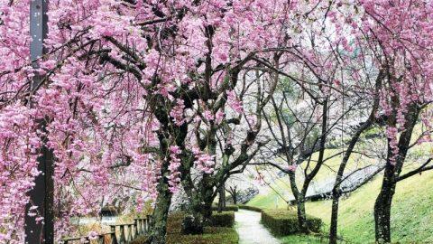 エルビレッジ桜