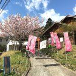 4月8日(日)かみかわ桜の山 桜華園「さくらまつり」に行ってきた。
