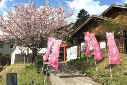 かみかわ桜の山 桜華園「さくらまつり」に行ってきた。
