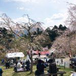 (開催終了)かみかわ桜の山 桜華園 さくらまつり|4月6日(土)7日(日)