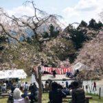 【中止または延期】【神河町】かみかわ桜の山 桜華園(おうかえん) さくらまつり|4月11日(土)12日(日)