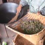 5月12日の茶もみの様子 | 越知谷菜っぱの会