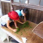 (開催終了)5月12日(土)茶摘み体験 | 越知谷菜っぱの会
