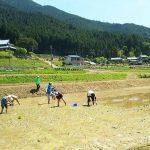5月12日 田植体験 | 神崎農村公園ヨーデルの森