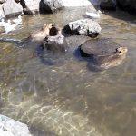 暑い日は、水遊びに限ります | 神崎農村公園ヨーデルの森