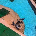 一緒に泳ぎたい気分   神崎農村公園ヨーデルの森