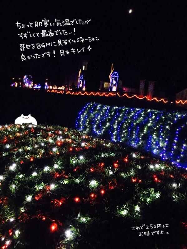 サマーイルミネーション|兵庫県立フラワーセンター