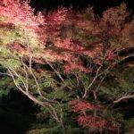 かさがた温泉せせらぎの湯で紅葉がライトアップ