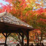 紅葉真っ盛り | エルビレッジおおかわち