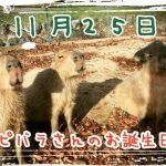 (開催終了)カピバラさんのお誕生日会(11月25日(日) 11時~) | 神崎農村公園ヨーデルの森