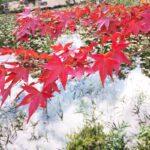 11月9日(金)~ 紅葉ライトアップ | 福本藩池田家陣屋跡
