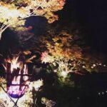 神河町|紅葉ライトアップ 2019|福本藩池田家陣屋跡