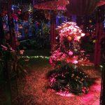 花と光のクリスマス 2018 | 兵庫県立フラワーセンター