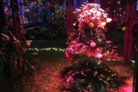 花と光のクリスマス