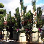 門松の納品もピーク | 藤樹園