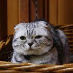 【ふれあいニャンコ村】あったかい室内でネコたちとのふれあいを楽しもう! | 神崎農村公園ヨーデルの森
