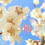 神崎郡(神河町・市川町・福崎町) 「梅の花スポット」をまとめたい | 天神さんで合格祈願