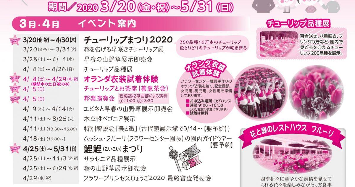 チューリップまつり2020|兵庫県立フラワーセンター|350品種16万本の色とりどりのチューリップ