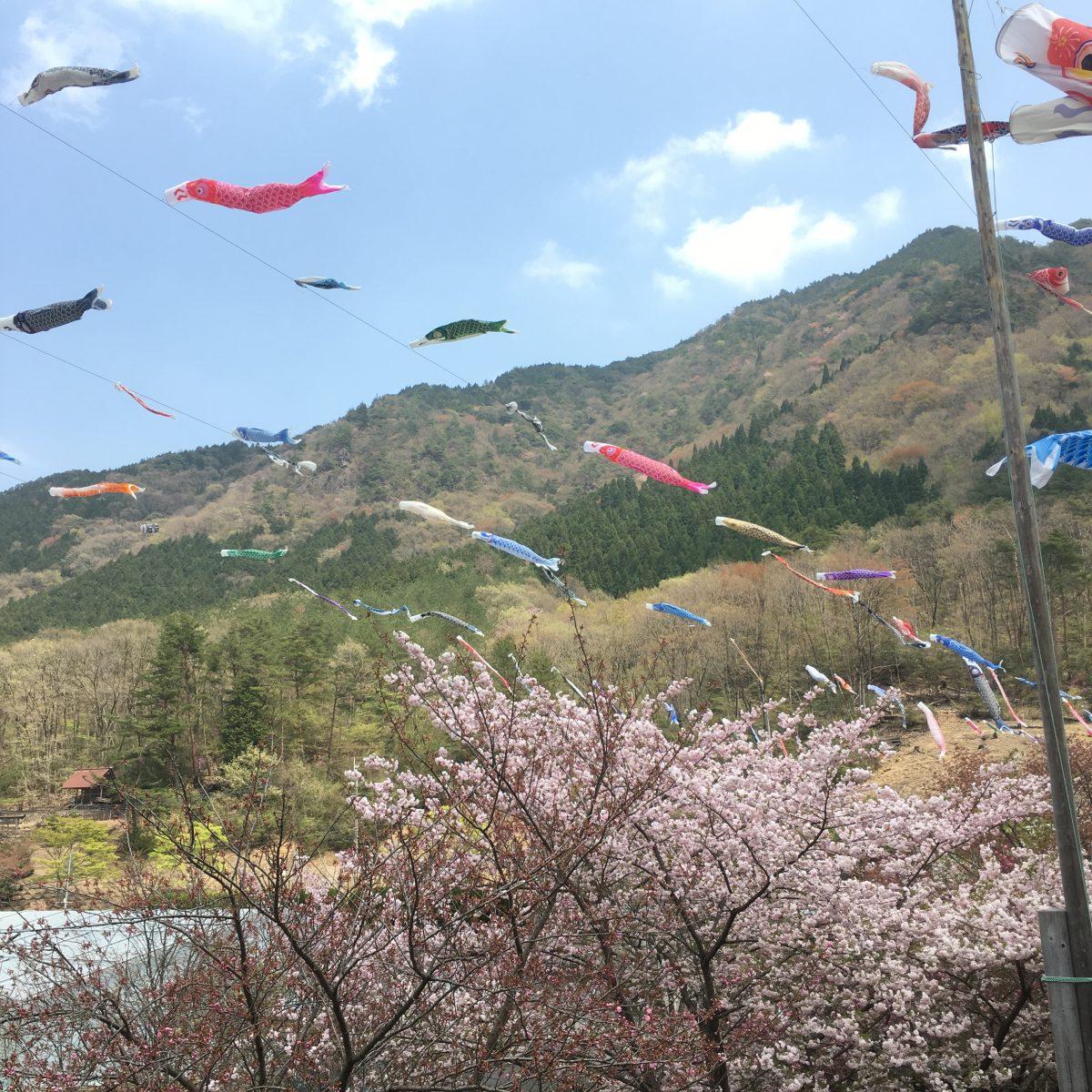 【神河町】鯉のぼりの大遊泳が始まりました。|グリーンエコー笠形