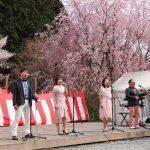 (開催されました)かみかわ桜の山 桜華園で『さくらまつり』
