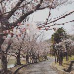 【加西市】桜|お花見スポット 万願寺川・法華口駅・普光寺