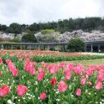 【加西市】フラワーセンター臨時休園|新型コロナウイルス感染拡大防止
