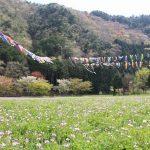 俵田の鯉のぼり|多可町の風物詩