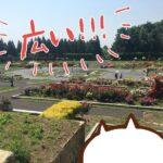 (ねこレポ)兵庫県立播磨中央公園 春のばらまつりに行ってきた。