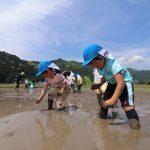 神崎保育園で田植え体験が行われました。