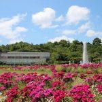 一転、ピンク色の世界に|兵庫県立フラワーセンター