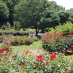 開花情報。夏の花も植栽|兵庫県立フラワーセンター