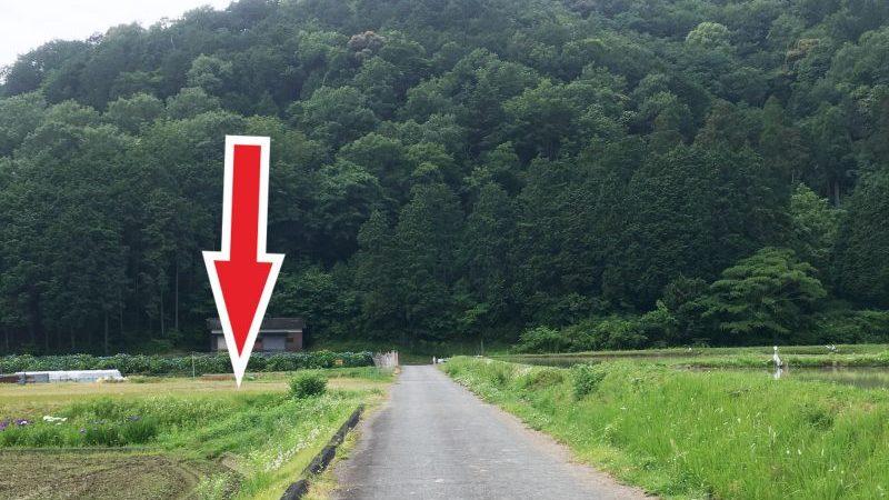 【福崎町】高岡の里「あじさいの小道」に行ってきた。レアな山アジサイを楽しむ