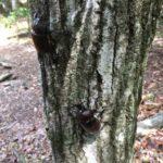 (先着100名)7月21日にカブトムシのサナギをプレゼント!|神崎農村公園ヨーデルの森