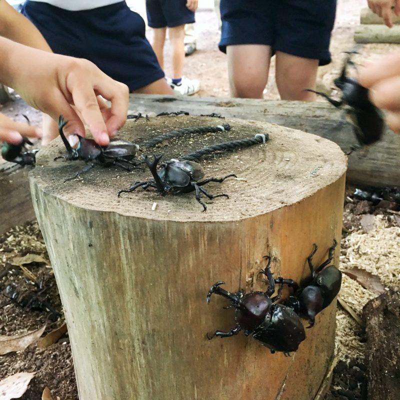 (2019年)かぶとむしど~む オープニングセレモニーが開催。|市川町