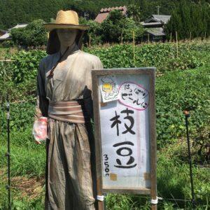 和装なイケメンマネキンがお出迎え。枝豆もあるよ! かまださん家のぶどう園