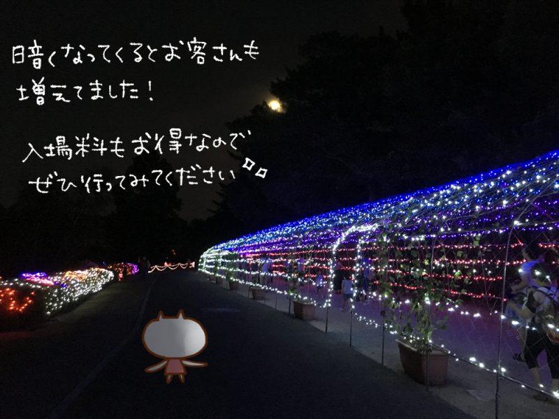(ねこレポ)サマーイルミネーション 2019に行ってきた。|兵庫県立フラワーセンター