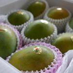 フルーツ続々と入荷中|菓旬処 彩sai