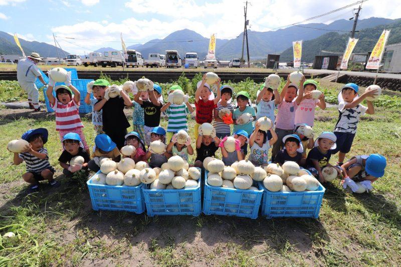 『銀馬車かぼちゃプロジェクト』の白皮カボチャを収穫|神崎保育園