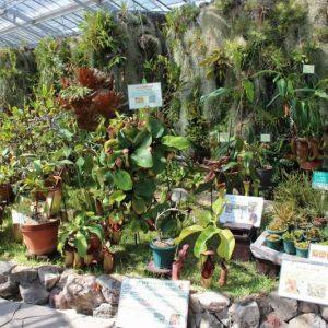 「食虫植物特別展示」は9月10日(火)まで|兵庫県立フラワーセンター