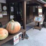 「かぼちゃの重さ当てクイズ」で新米コシヒカリ30kgゲット!