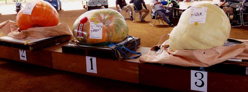 (開催されました)第2回 日本一どでカボチャ兵庫県大会
