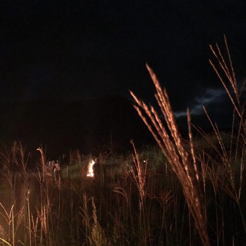 (行ってきた)銀色にたなびくススキも。砥峰高原観月会2019|神河町