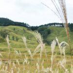 【神河町】砥峰高原(とのみねこうげん)を満喫したい!|四季のイベントと風景